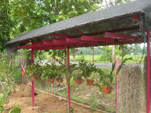 abah cuba bodek emak dengan menyediakan tempat pokok orkid agar aktiviti nya tidak diganggu